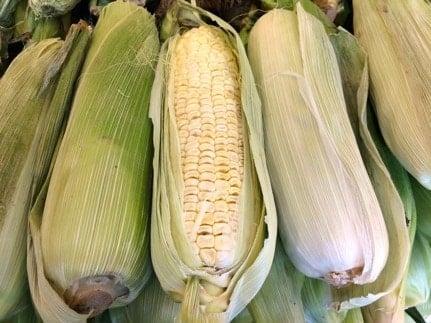 GMO 3