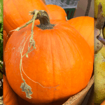 Fall in Love with Autumn Produce