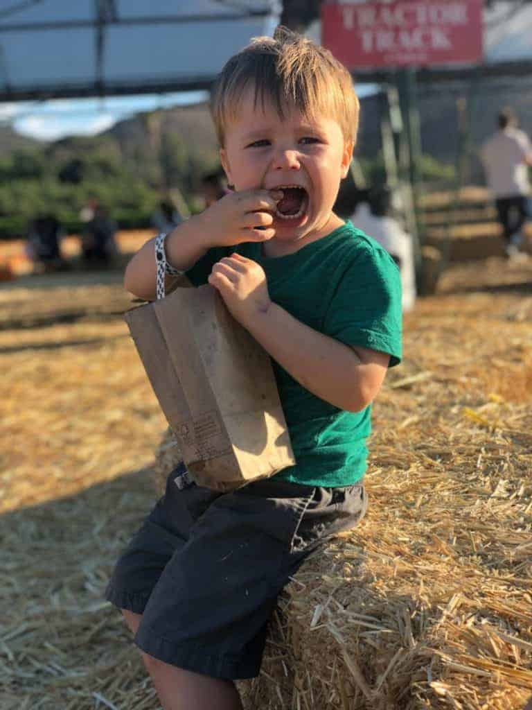 Four year old James Dunham eating kettle corn at the pumpkin patch.